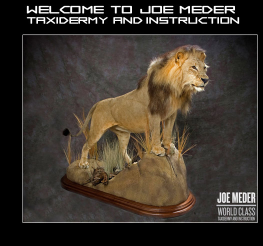 Joe Meder World Class Taxidermy and Instruction