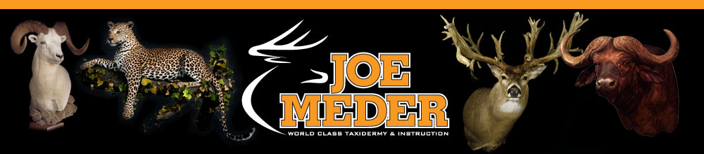 Joe Meder _ Iowa Taxidermy and Taxidermy Class Instruction